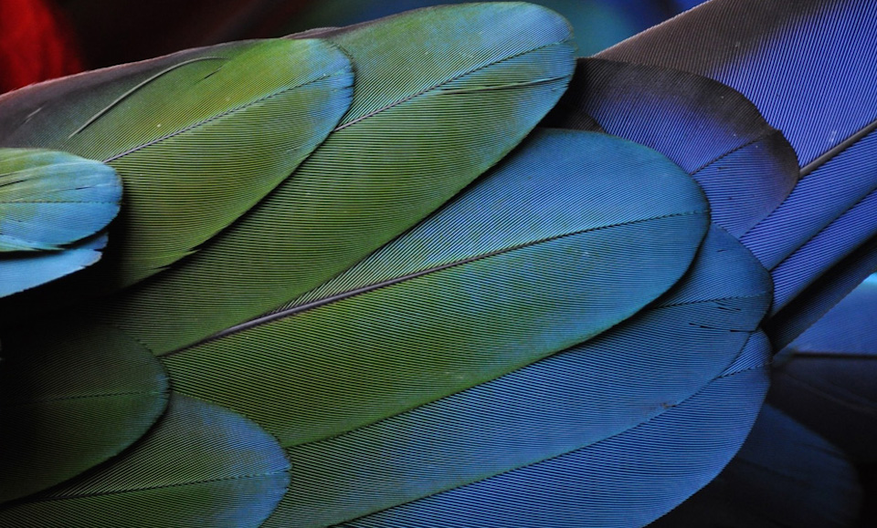 A close-up of leaves.